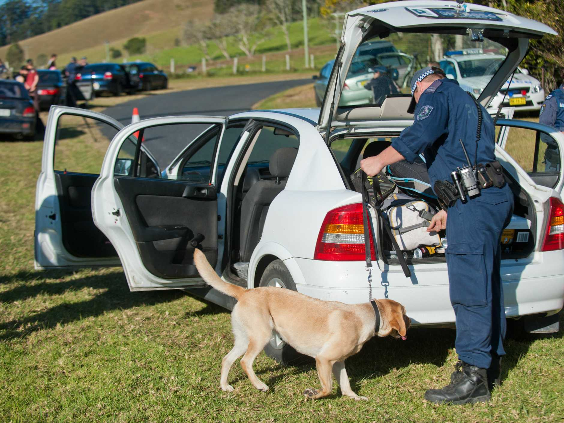 A drug detection canine sniffs for drugs during Operation Borasca on Friday Creek Road west of Coffs Harbour.