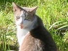 Older male 14-15 year old cat needs a new home after his home was destroyed by fire at Mallanganee.