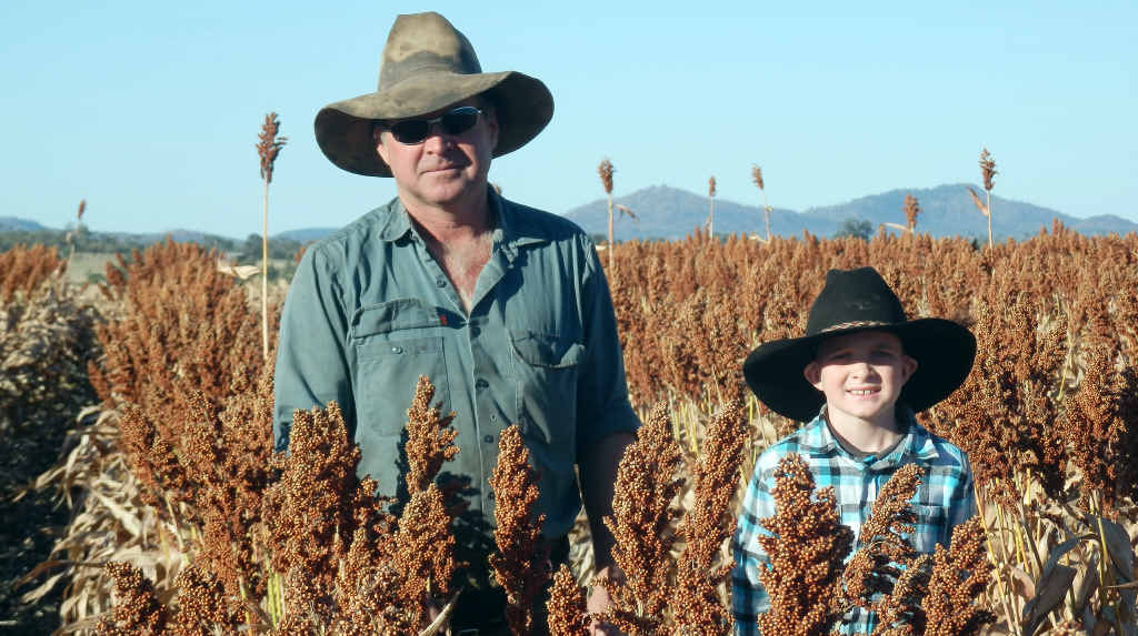 AFFECTED: Mark and Ashton Kemp of Yungaba Station in the paddock with their sorghum just before harvest.