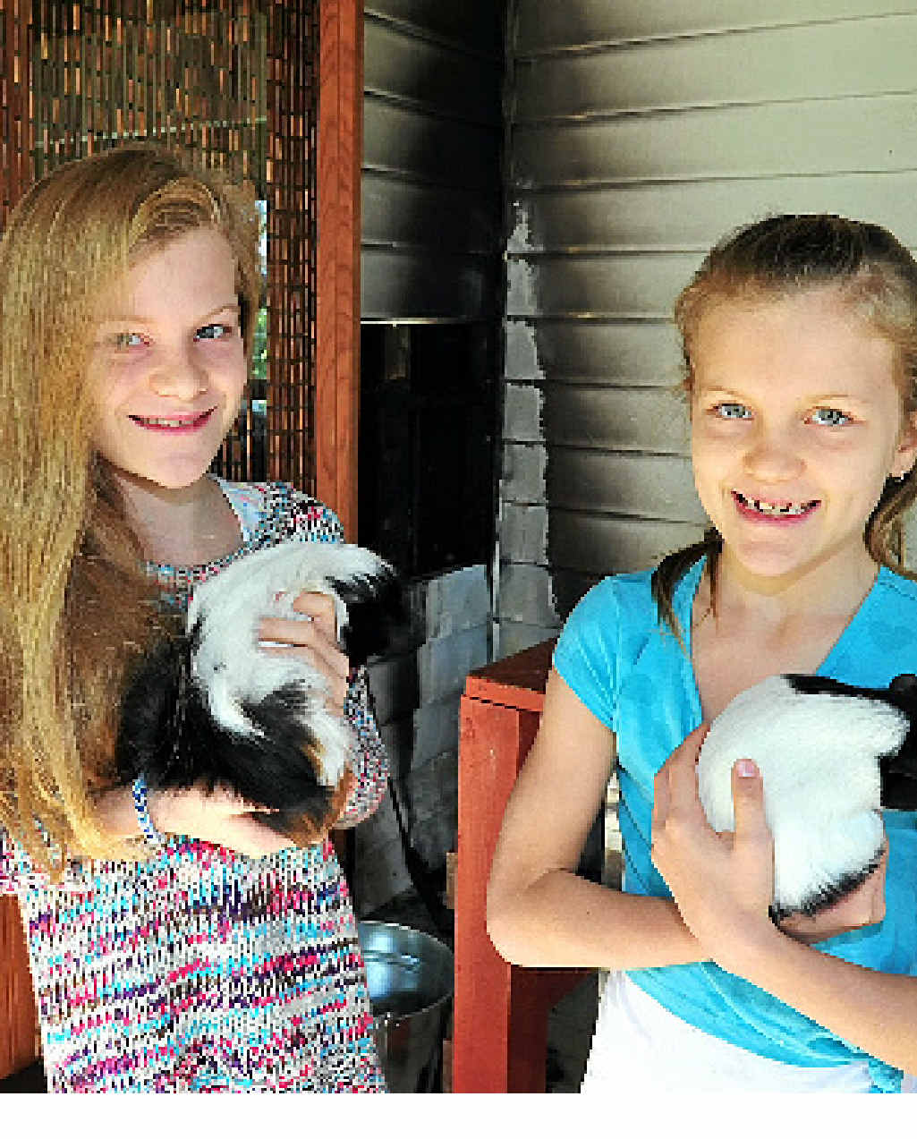 HEROES: Ruby and Poppy Allen with guinea pigs Tash and Bubble after they saved the animals and their Noosa Heads house.