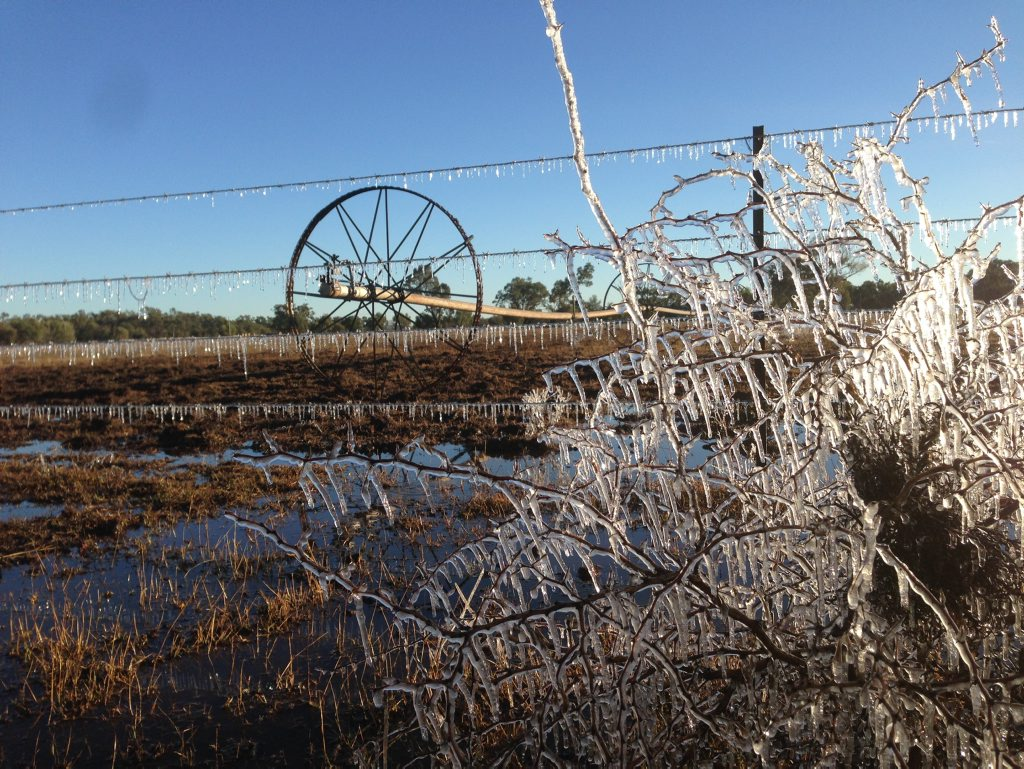 COLD AS ICE: Frost turns Warren Marr's Clermont lucerne farm into a winter wonderland recently.