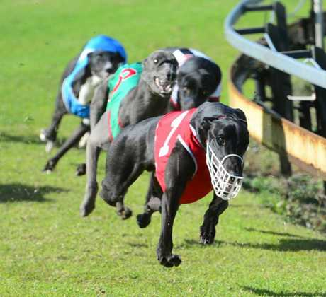 Raids on properties revealed greyhound trainers and owners were practicing animal cruelty.