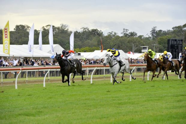GONE: Ipswich Cup winner Brave Ali is one of seven scratchings from today's Grafton Cup.