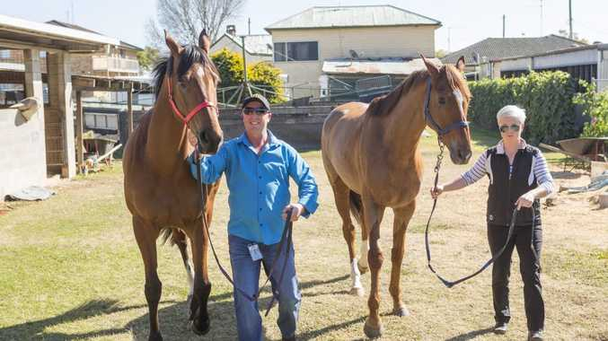CUP BOUND: Foremen Des Fischer and strapper Laura Stritch with Gai Waterhouse's contenders in the Grafton Cup Queenstown and Travolta. Photo: Adam Hourigan / The Daily Examiner