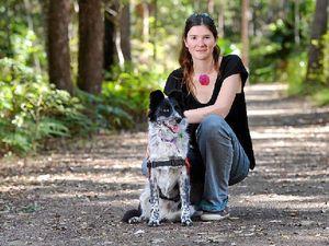 Maya the koala-poo detection dog
