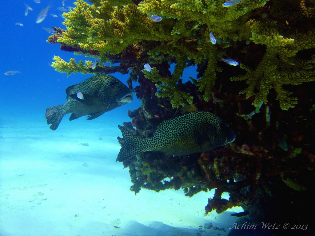 Does Australia deserve the responsibilities of managing the Great Barrier Reef? Photo Achim Wetz