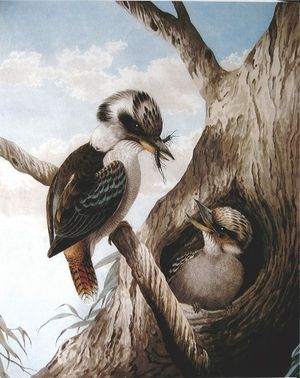 Neville Cayley's Kookaburra with Catch 1892 Photo Contributed
