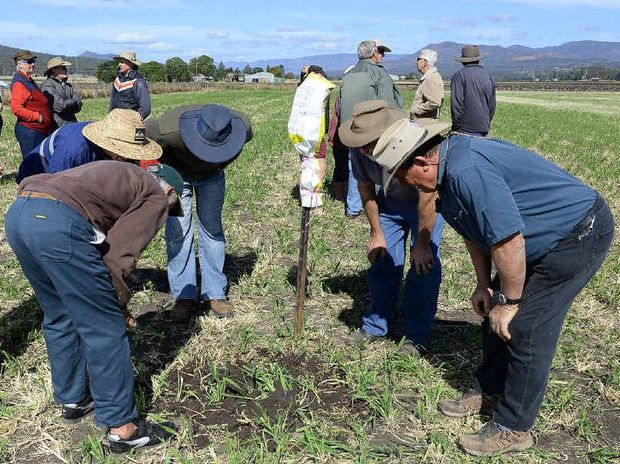 GROUND ZERO: People inspect a fire ant nest after a demonstration in Laidley South to show how the nests are destroyed.
