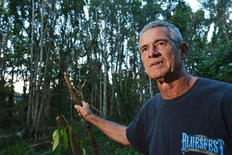 Frusted Coolum resident Greg Onions talks about the flying foxes back in Coolum. Photo: Patrick Woods / Sunshine Coast Daily