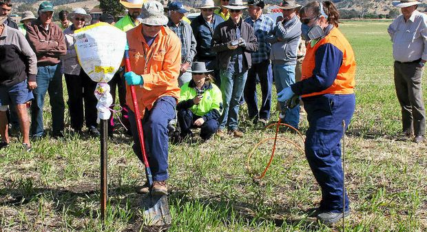 WAGING BATTLE: Biosecurity show local farmers and residents a direct fire ant nest injection demonstration on Monday in Laidley South.