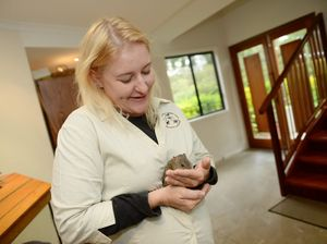 Bandicoot feeding time at Gladstone & District Wildlife Carers Association