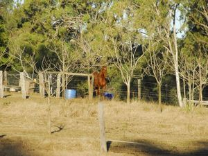 Vet seething after Hendra virus kills horse