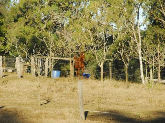This Brendonna Rd property in Calliope, near Gladstone, has been quarantined.