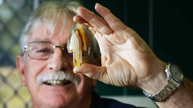 ROCK SOLID: Ipswich Lapidary Club treasurer Brian Parker encourages people to visit the annual Ipswich Gem Show.