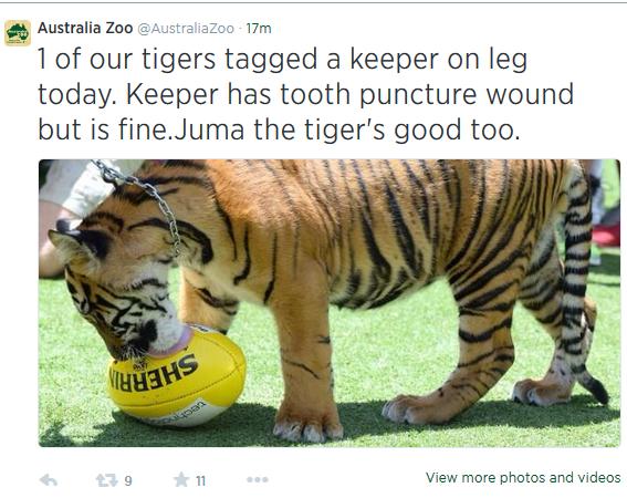 Tweet by Australia Zoo today.