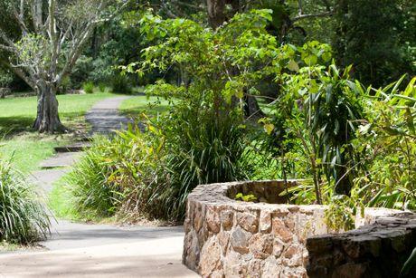 Sunshine Coast Hinterland. Kondililla National Park. Photo Lou O'Brien / Sunshine Coast Newspapers