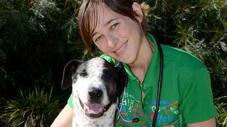 BETTER NOW: Bull Arab cross Lucy, with vet Lobke Buhrmann.