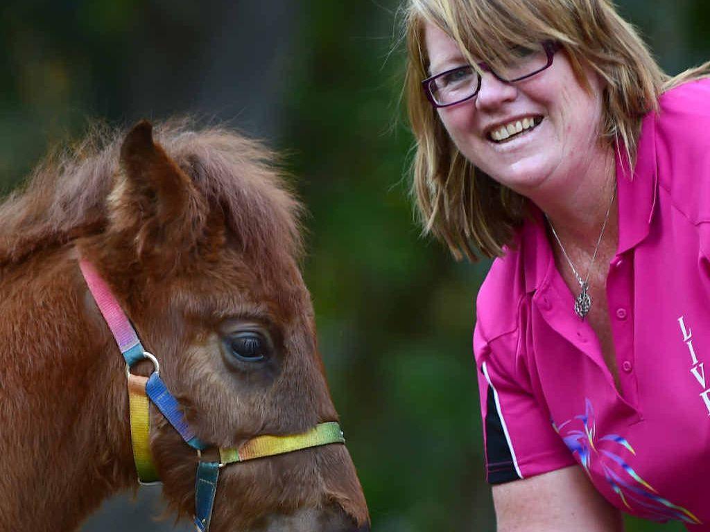 Happy Birthday Horses Of The World Sunshine Coast Daily