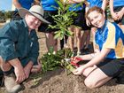 News Bundaberg, 1.8.2014, Kalkie State School, Ray Norris & student Duncan Allen yr6 plant a Macadamia tree to celebrate 40yrs of production in Australia. Photo: Paul Beutel