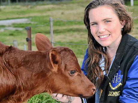OFF TO THE EKKA: Nambour High School student Jasmine Burr with a calf born on Sunday.