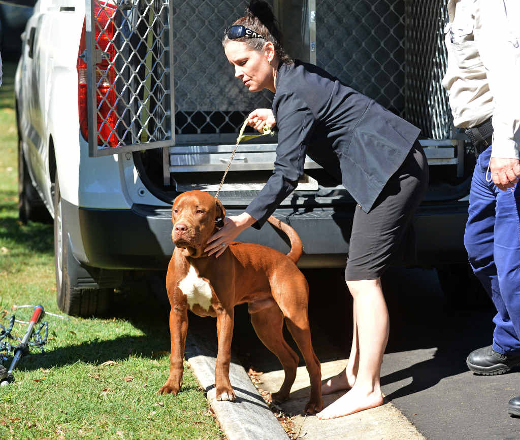 DRAMA: Three dogs (above and below left) are surrendered to council officers after the fatal mauling of a puppy in the street . The distressed owner (below right) talks with police.