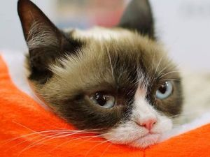 Online star Grumpy Cat is now worth $108m