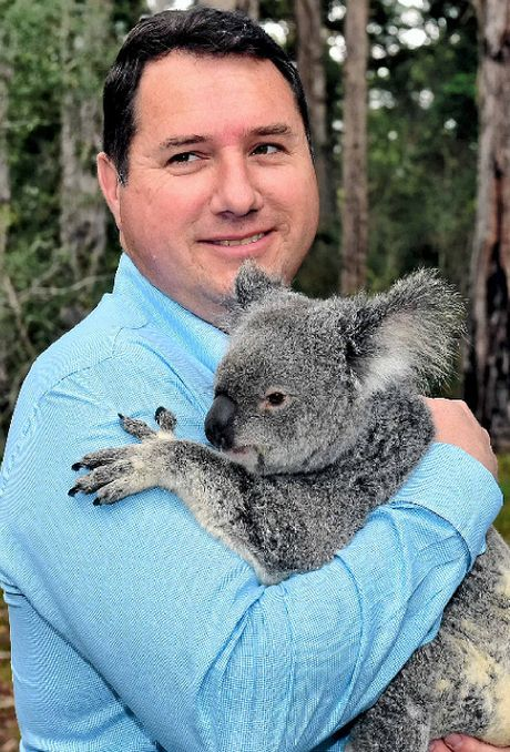 LOOKING FOR LAND: Environment Minister Andrew Powell with April the koala at Tewantin National Park.
