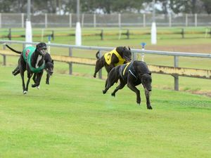 Greyhound trainers Kay and Noble face ban