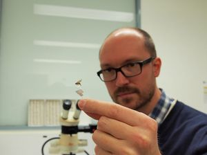 QLD scientist's fight against fruit flies wins fellowship