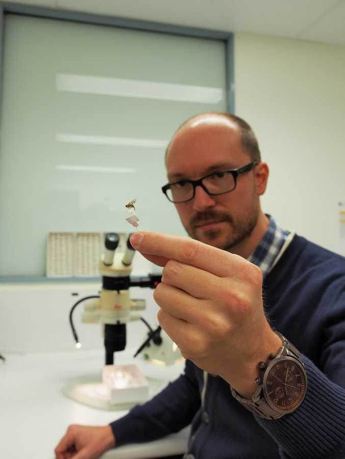 Queensland scientist Dr Mark Schutze will work with the Smithsonian National Museum of Natural History in Washington to learn about fruit flies. Picture: Supplied