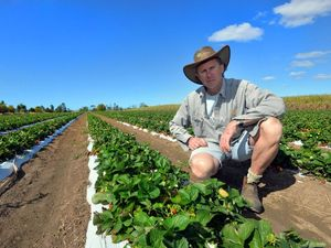 Rainfall is a mixed blessing for growers