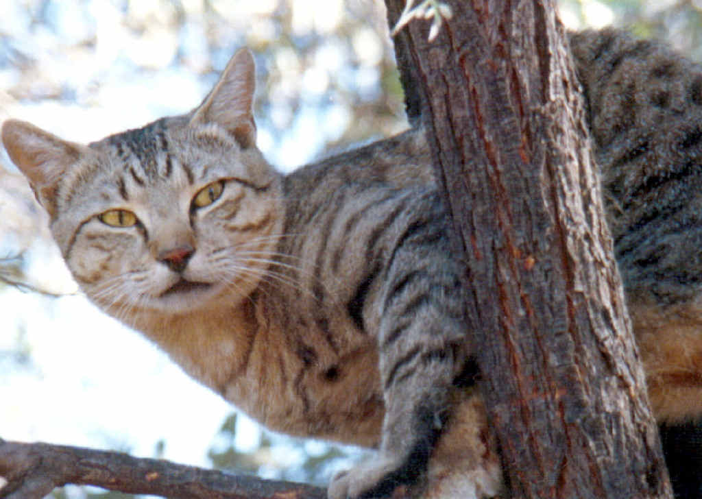 ON THE LOOSE: Feral cats are running wild in South Grafton, according to locals.