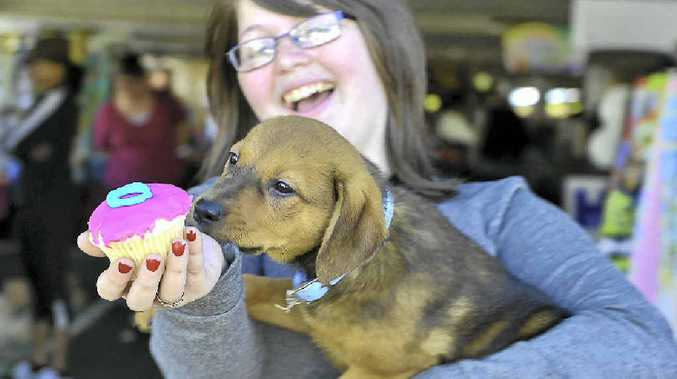LITTLE CHAMP: Leona Ebert, 13, tempts this cute and active pocket rocket Serena with a cupcake.