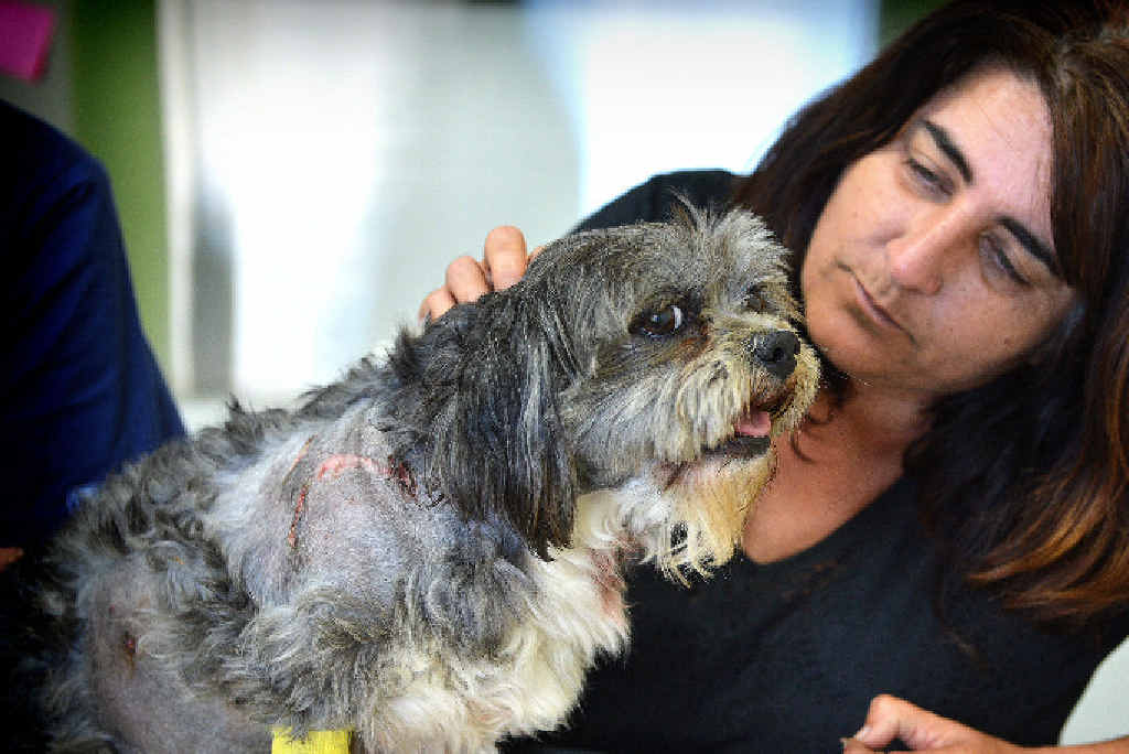 Samantha O'May believes her beloved little dog, Barny, is lucky to be alive after being mauled by wild dogs.