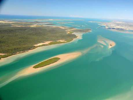 ERADICATION: Authorities continue to kill-off the remaining rogue cattle and pigs threatening the existence of Curtis Island's native wildlife. Photo: Australian Marine Conservation Society