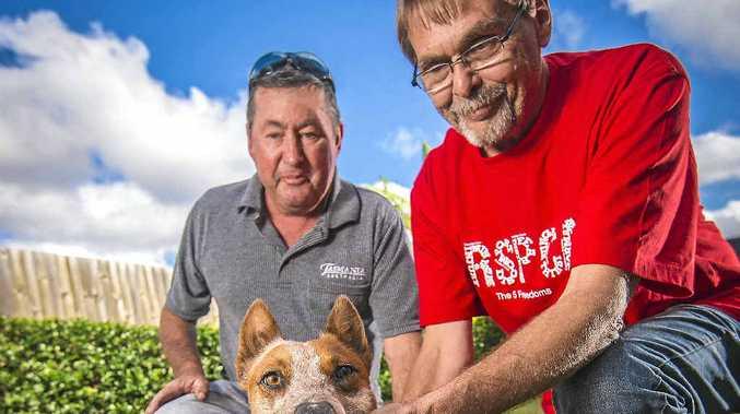 HIGH HOPES: Foster carer Tony Warrick, Brandee, and RSPCA volunteer Ole Sandbaek are hoping for success.