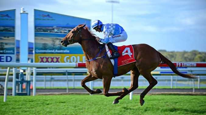 Winning horse from Race 5, Corbould Park. Photo: Iain Curry / Sunshine Coast Daily