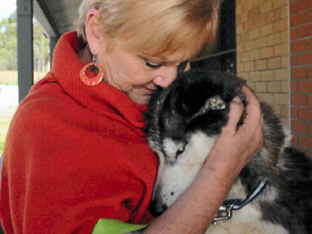 ALLEGEDLY MALTREATED: Friends of RSPCA's Judy Whicker gives the emaciated husky some loving care soon after its arrival at the RSPCA building six weeks ago.