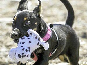 Pet adoption day being held at Ballina on Saturday