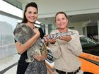 Lauren Ritchie of RACQ (left) with April the koala, Sarah Keogh with Alfred the blue tongue lizard at Lexus of Maroochydore for a preview of the RACQ Australia Zoom event. Photo: Iain Curry / Sunshine Coast Daily