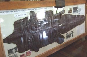 The hide of the croc shot in the Mary River in 1964 is at the Bauple museum.