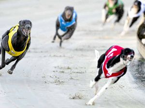 It's time to give up and walk away from greyhound racing