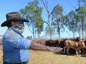 Woorabinda abattoir shown to be feasible - now for funds