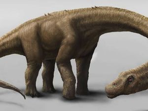 Meet Dreadnoughtus: seven times bigger than T Rex