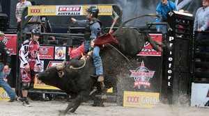 Gotcha Rockin', an unbeaten Banteng bull