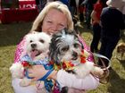 Tracey Kerr with Chanel the maltese (left) and Cujo the maltese shih tzu.