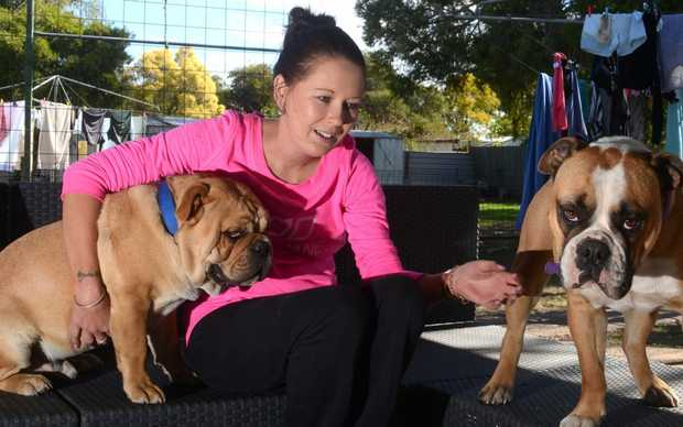 Kel Roberts with her two bulldogs. A friend she connected with through their love of bulldogs started the campaign to help pay her medical bills. Photo Will Hunter / Dalby Herald