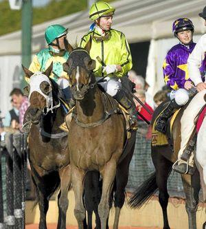 TOP TIP: Brisbane jockey Ric McMahon will ride Romanarma in the Slipway Hotel Ballina Cup at the Ballina Jockey Club today.