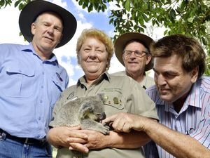 NPWS seek volunteers for annual Bongil Bongil koala count