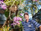 Orchid Grove garden open to the public. Chris O'Dempsey with a selection of his plants. Photo: Warren Lynam / Sunshine Coast Daily